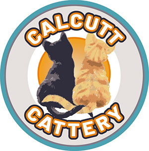 Calcutt Cattery